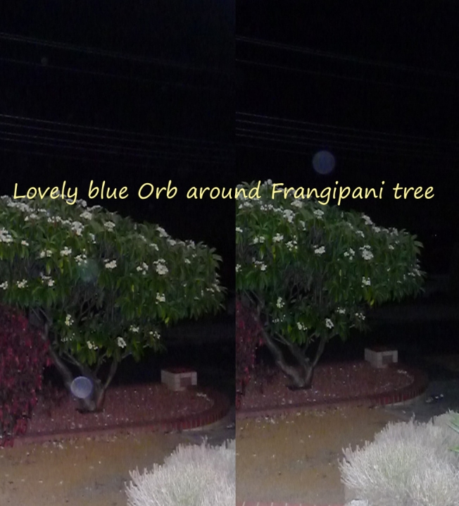 Here is a photo of some energy around the Frangipani tree at my house.